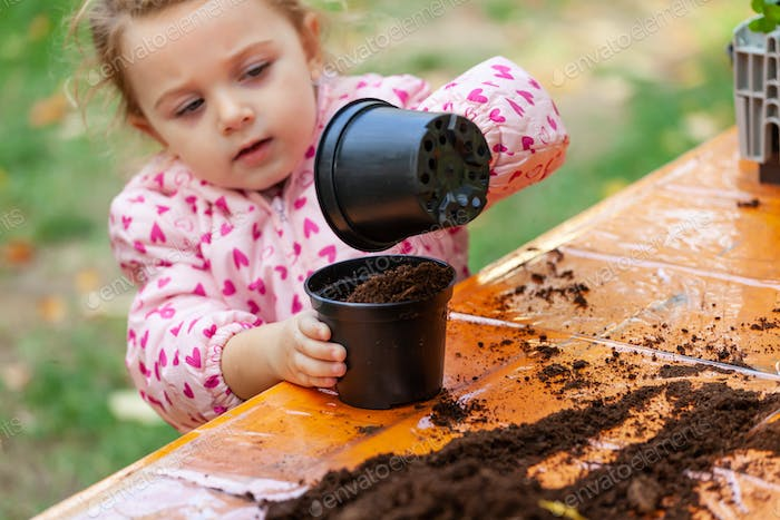 View of toddler child planting young beet seedling in to a ferti