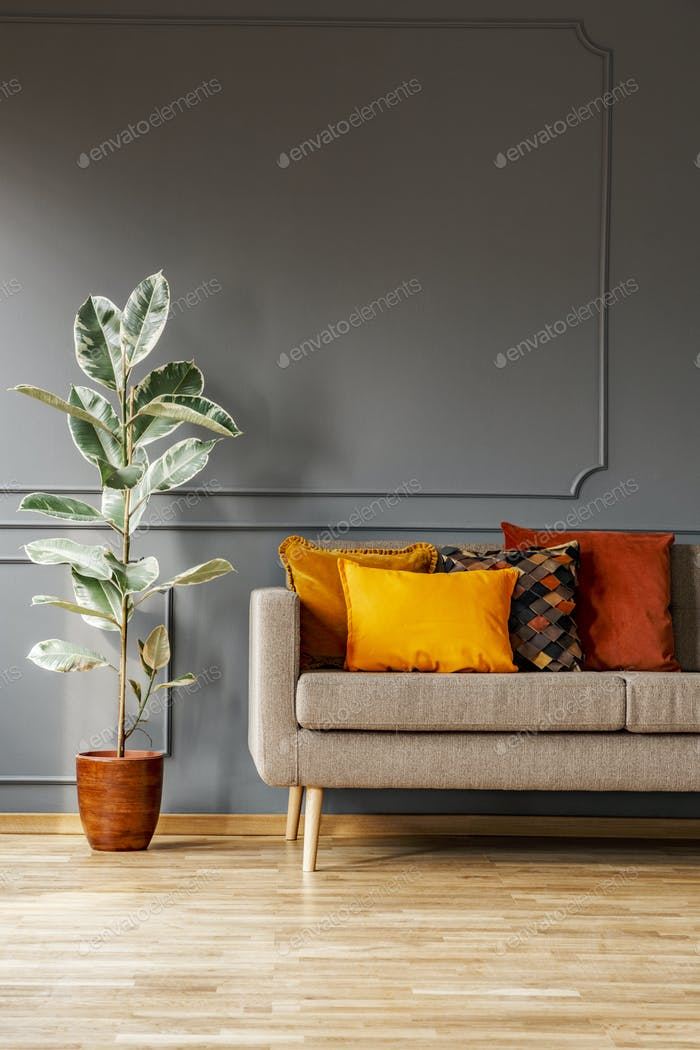 Ficus Next To Brown Sofa With Orange Cushions In Grey Living Roo
