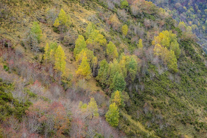 Birch forest in early Autumn