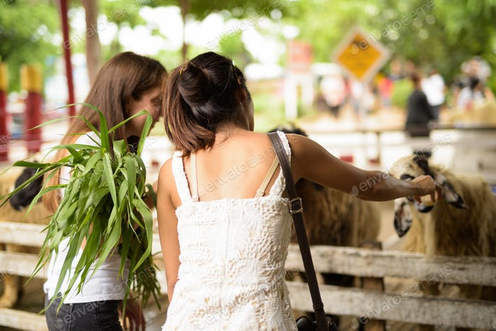 Two young multi-ethnic woman friends feeding the sheep while hav