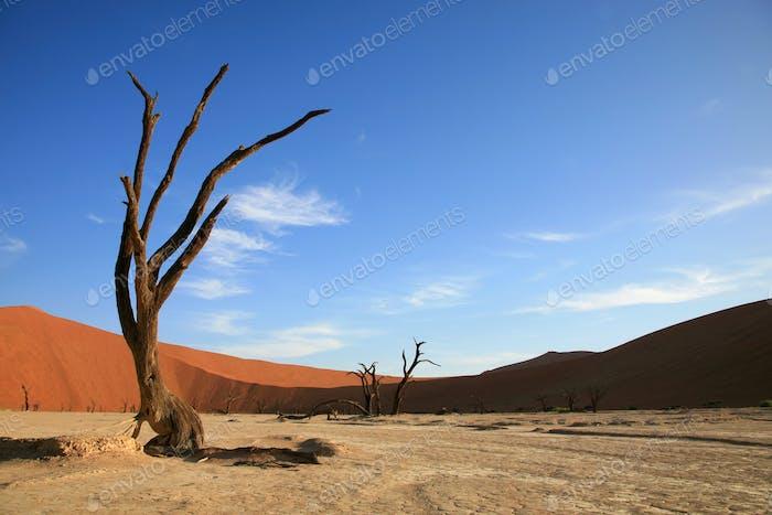 Dead tree in Sossusvlei