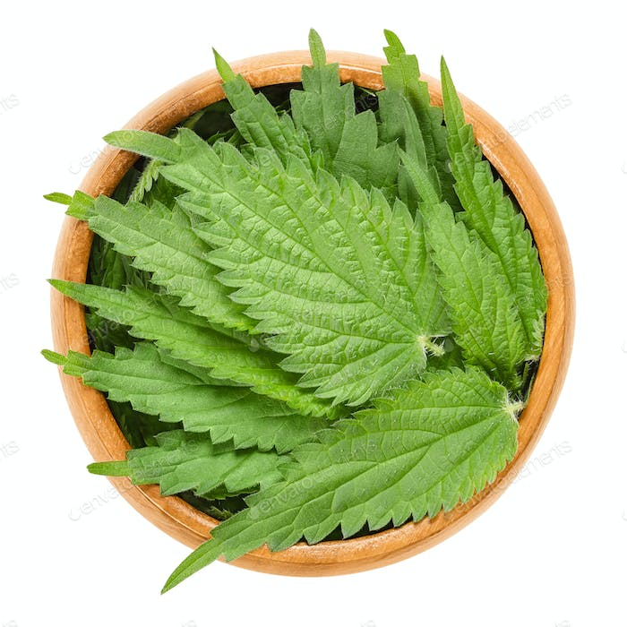 Common nettle leaves in wooden bowl over white