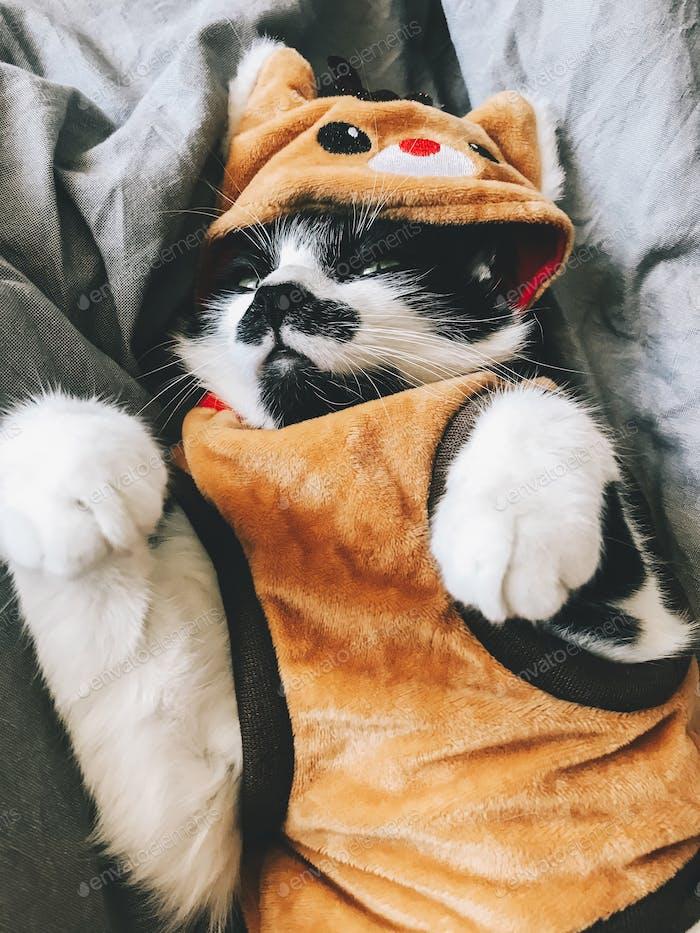 Cute cat in christmas reindeer costume relaxing on bed