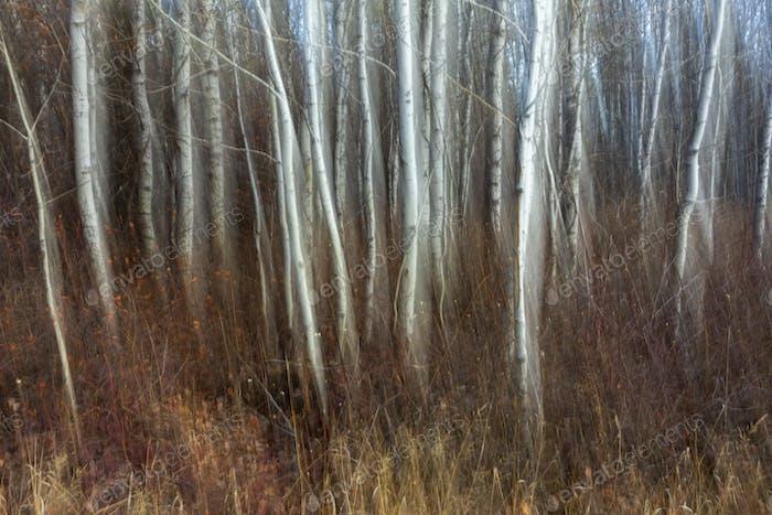 Cerca de Leavenworth, Washington