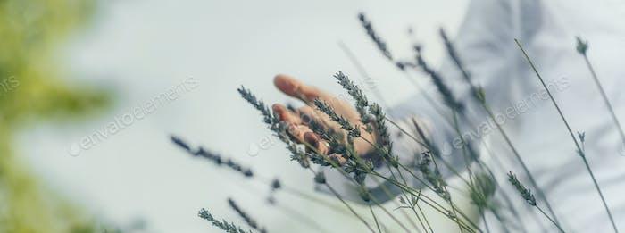 Überfluss Gefühl. Mindful Frau mittleren Alters Berühren Lavendel Blumen, Gefühl Dankbar