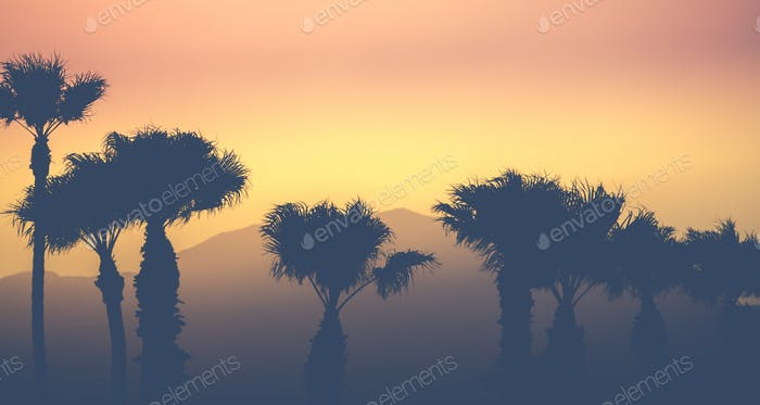 Mountain Desert Palms