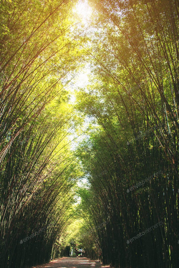 The bamboo arranged in long rows