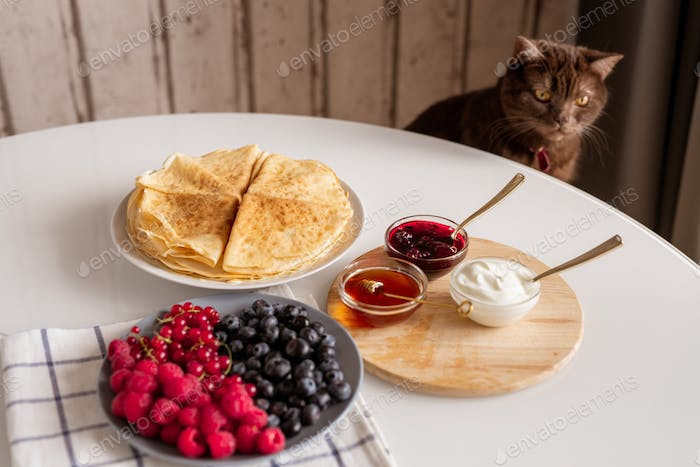 Brown domestic cat sitting by kitchen table with fresh food for breakfast