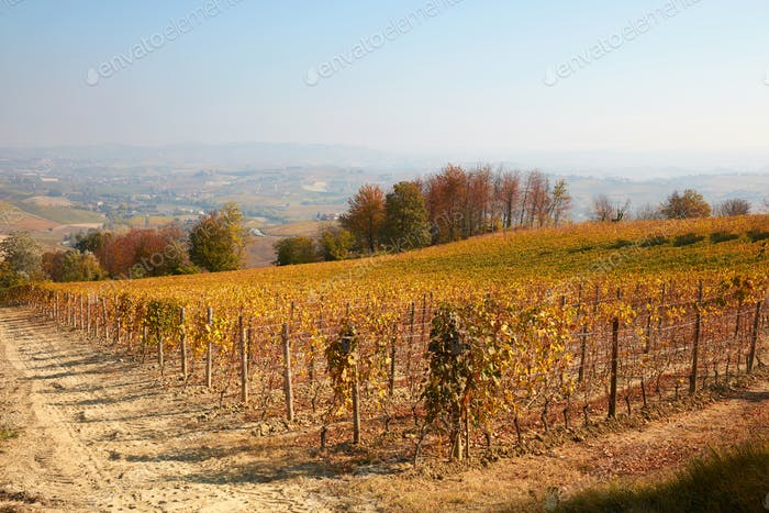 Vineyard in autumn with yellow leaves and hills in Italy
