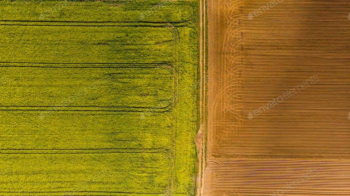 Gelbe Rapsfelder und Pflugboden, LuftDrohne ansicht