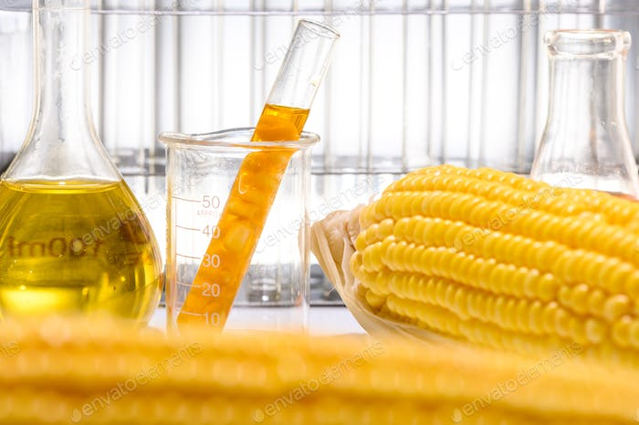 Biofuel from corn, oil and biofuel solution.
