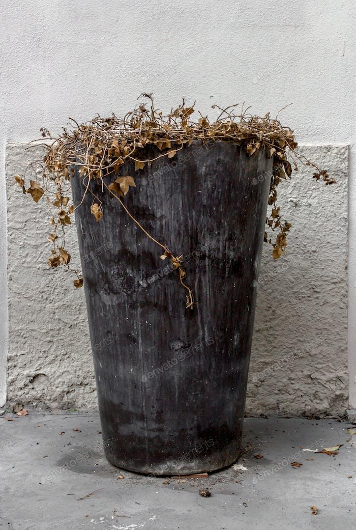 Vase of dead flowers