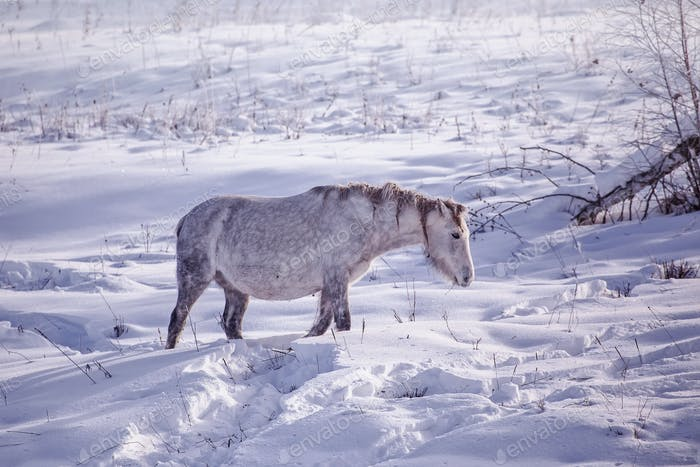 One Horse stay in the snowy woods in winter