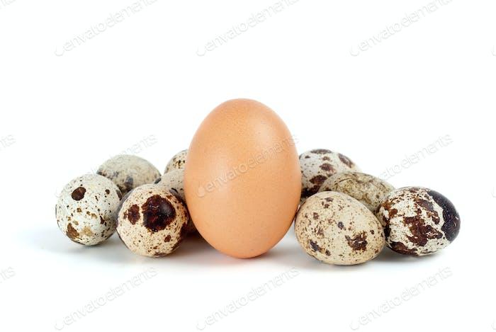 Wenige Wachteleier und einzelnes Hühnerei