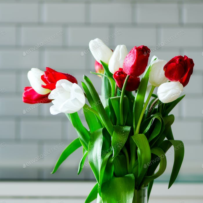 Fresh white and red tulips on kitchen background. Present from husband, man. Copyspace