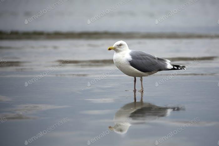 Gull near the sea