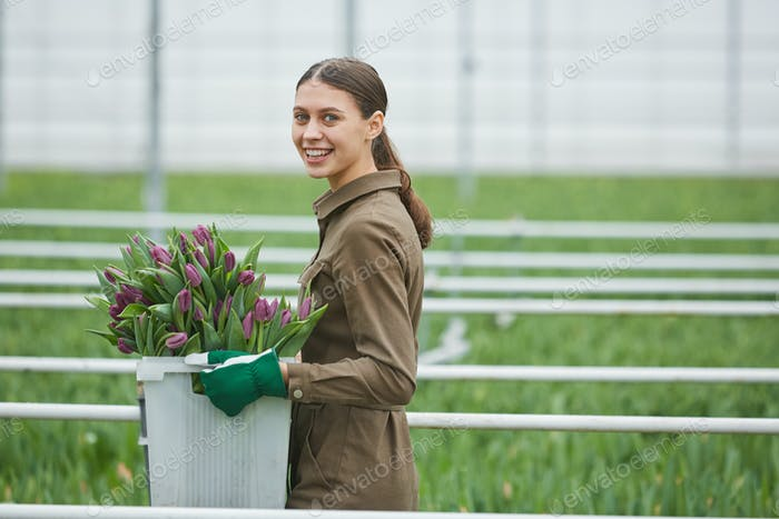 Woman Carrying Fresh Tulips in Flower Plantation
