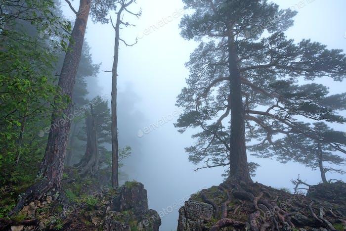 Fantasy nebligen Wald