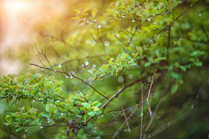 twinkling lights vivid color blurred bokeh spring from leaf back