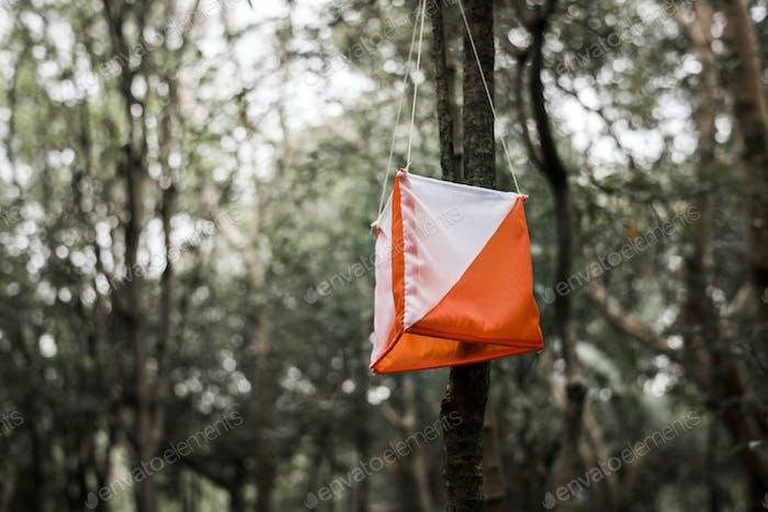 Caja de orientación al aire libre en un Bosque