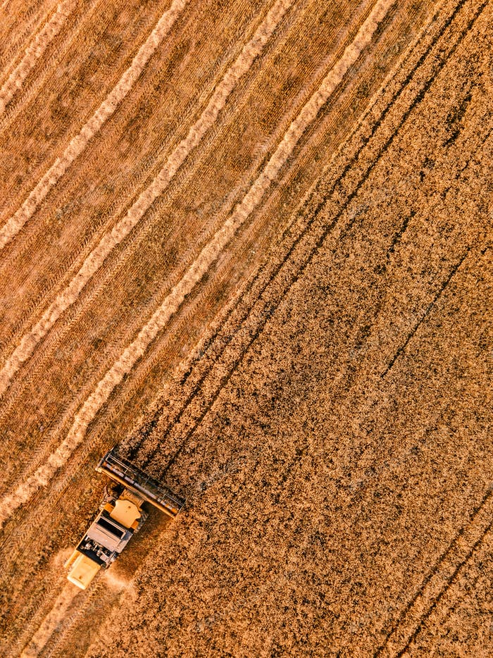 Aerial view of the combine harvester agriculture machine working on ripe whea