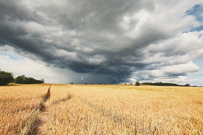 Sturm und reife Getreidefelder