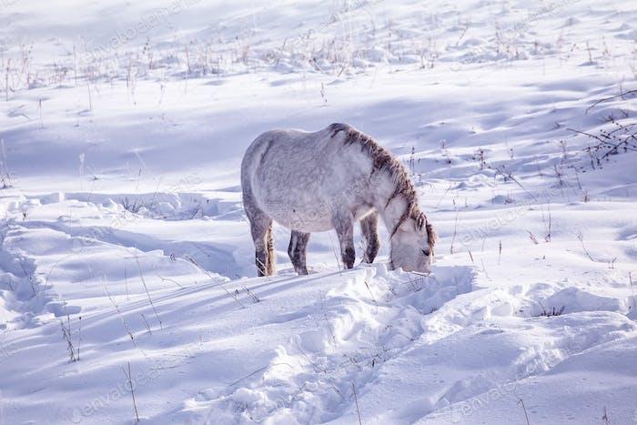 Ein Pferd Aufenthalt im verschneiten Wald im Winter