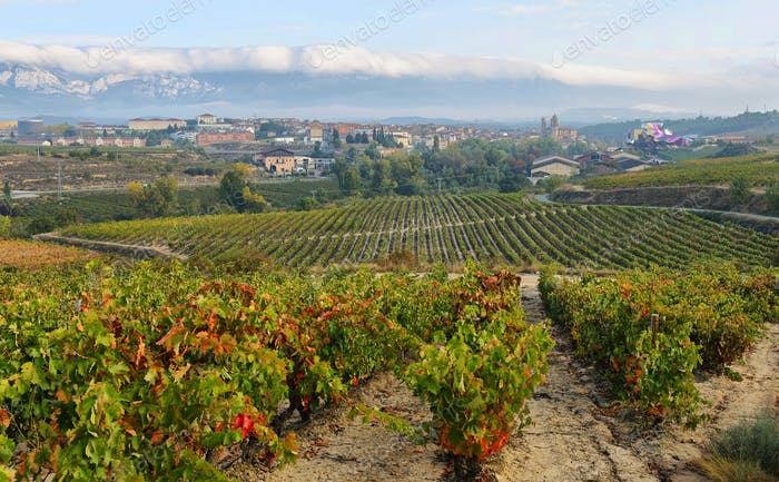 ountryside town of elciego and autumn vineyards in la rioja, Spain