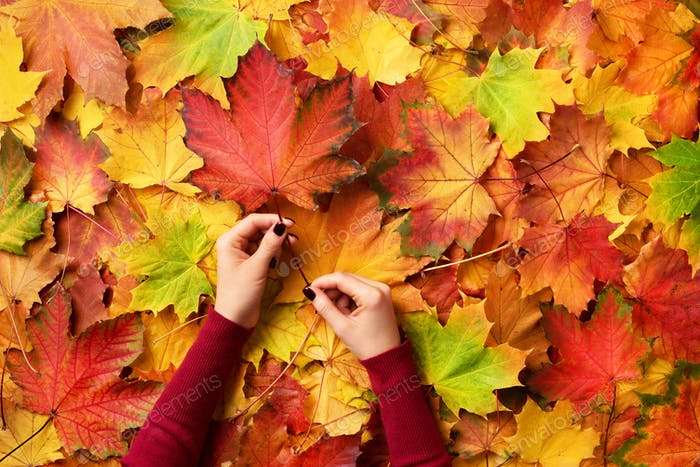 Maple leaf in girl hands. Abstract autumn background. Copy space for advertising. Sunny day, warm
