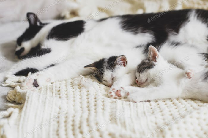 Mother cat resting with baby kittens on comfy blanket in room