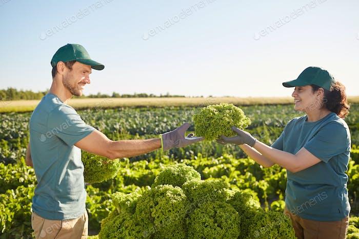 Rich Harvest at Vegetable Plantation
