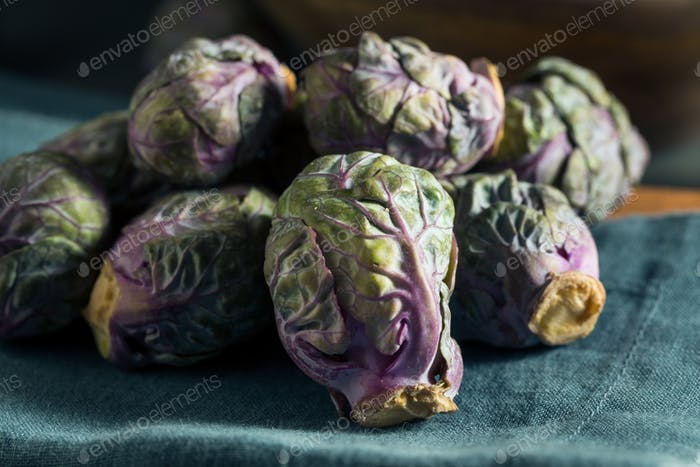 Raw Green and Purple Brussel Sprouts