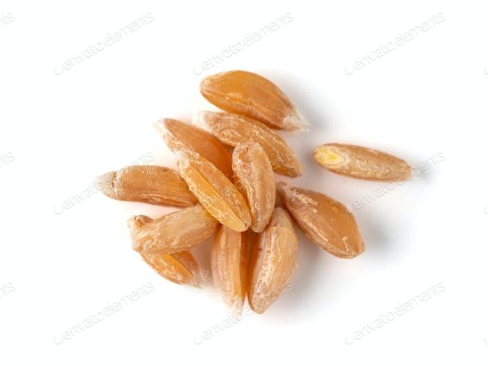 spelt seeds isolated on white background