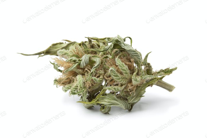 Dried marijuana bud with visible THC