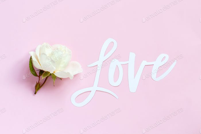 Cream rose and text LOVE on a light pink background