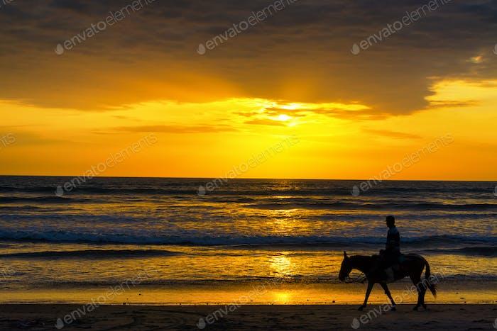Horse Rider on a Beach