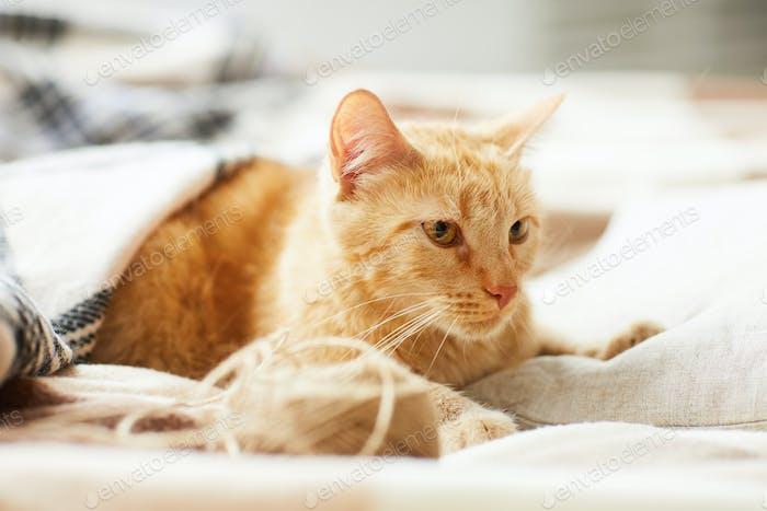 Ginger Katze liegend auf bequemem Bett