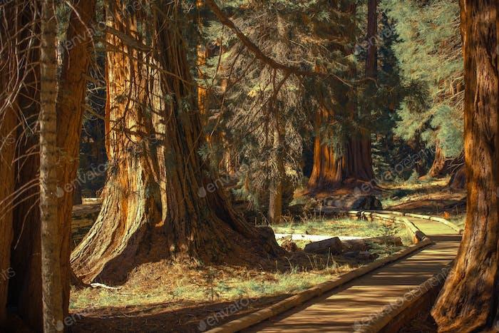 Giant Sequoias Trailheads