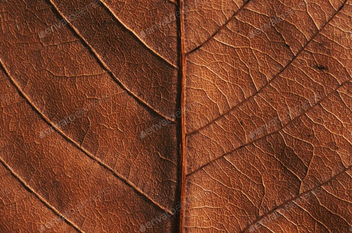 Close-up view of the dry leaf