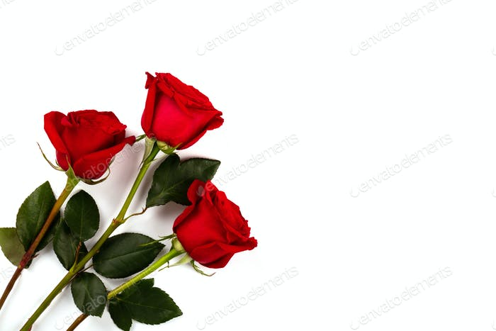 Bouquet Red Roses on a white background. Mother's Day, Birthday, Valentine's Day.