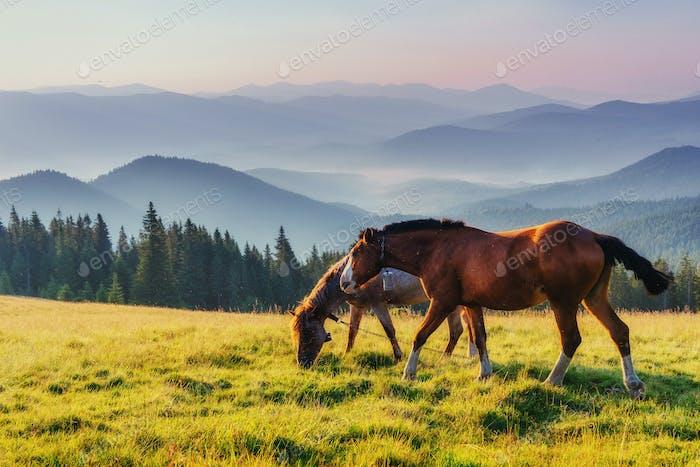 Pferdeweide in den Bergen. Mysteriöser Sonnenaufgang, der von fo