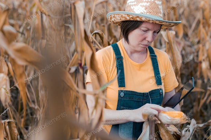 Female corn farmer using digital tablet in cornfield, smart farming