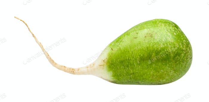 fresh green Lobo (margelan) radish isolated
