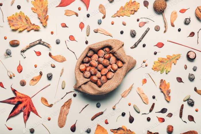 Hazelnut heap in burlap sack with autumn decoration