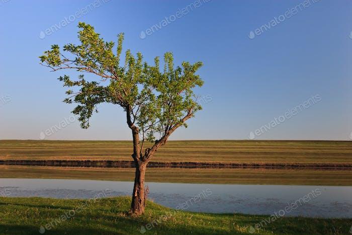 ein einzelner Baum
