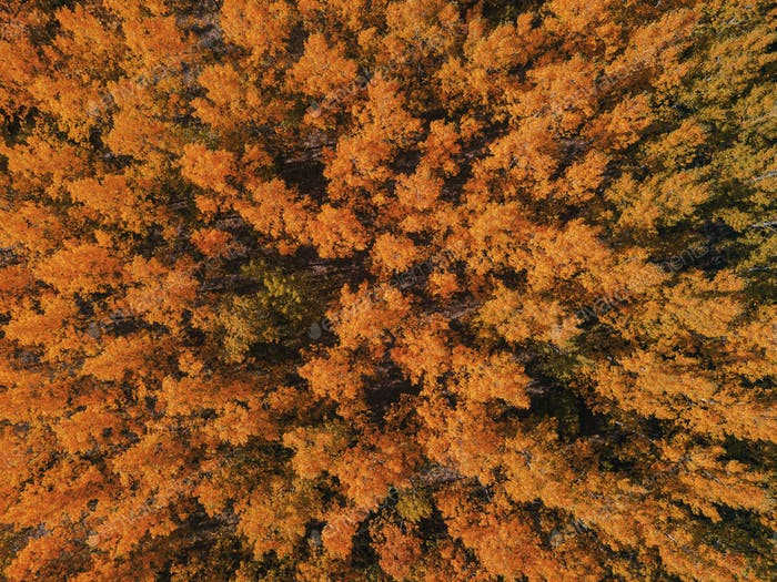 Aerial view of beautiful forest in autumn