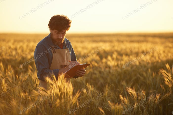 Mature Farmer in Fields at Sunset