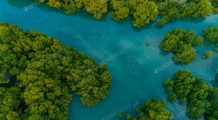 aerial view of the mangrove swamps , city of Dar es Salaam