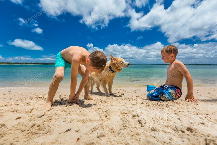 Two boys hugging golden retriever on the sandy beach