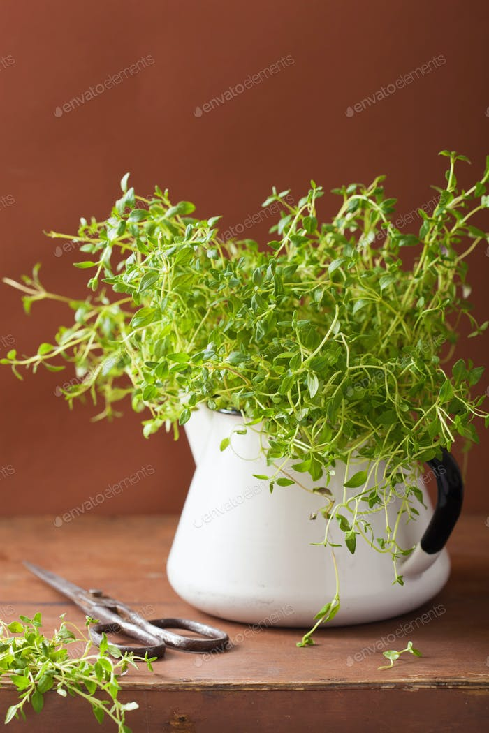fresh thyme herb in enamel pot